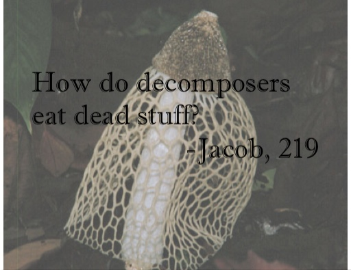 How do decomposers eat dead stuff?