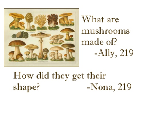 What are mushrooms made of? How do they get their shape?